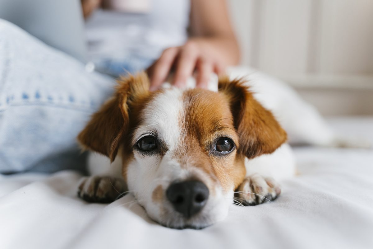How To Choose The Right Pet Insurance Policy